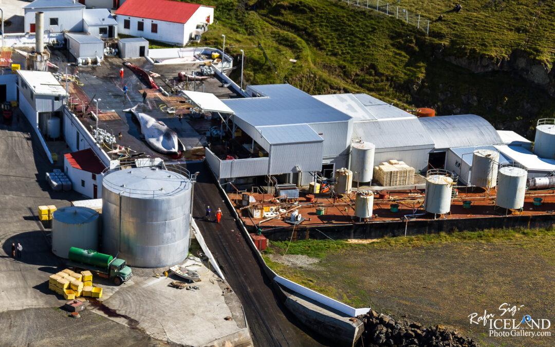 Whale station in Hvalfjörður Iceland
