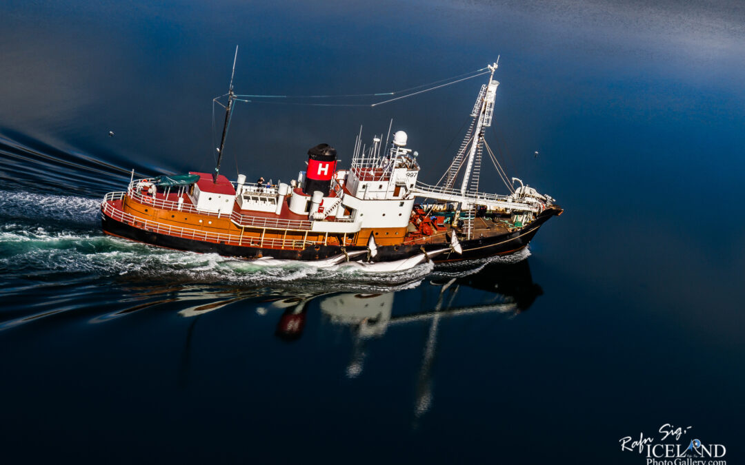 Whale photo │ Whale boat │ Two Whales on Starboard │ Hvalfjörður