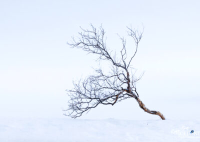 Fnjóskárdalur tree - North │ Iceland Landscape Photography