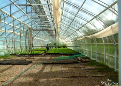 Greenhouse at Hallormsstaður – Eastfjords │ Iceland Landsca