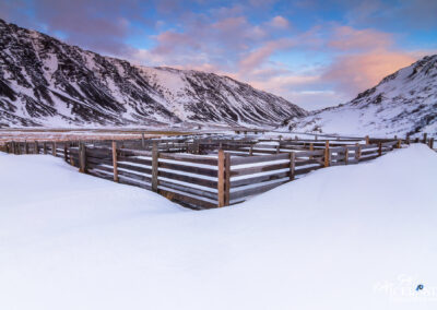 Sheeppen in Djúpifjörður │ Iceland Landscape Photography