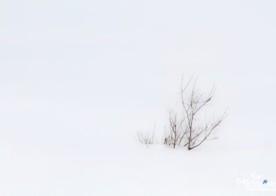 Tree in snow - South West │ Iceland Landscape Photography