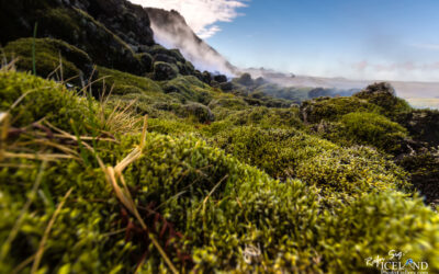 Green Moss at Eldvörp Craters │ Iceland landscape photo