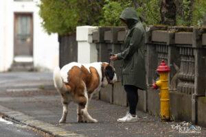 Reykjavík Dog Walk – City photography