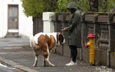 Dog Walk │ Reykjavík Capital │ Iceland