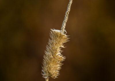 Visið strá - Wilt staw │ Iceland Nature Documentary