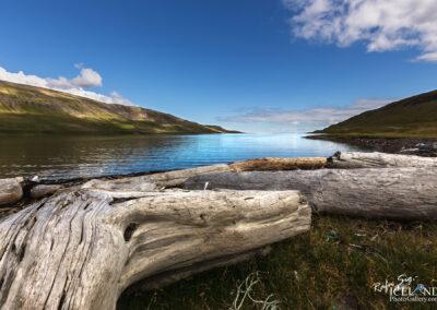 Bitrufjörður Driftwood - Westfjords │ Iceland Landscape Phot