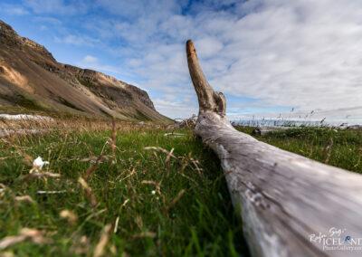 Driftwood along the coast - Westfjords │ Iceland Landscape Pho