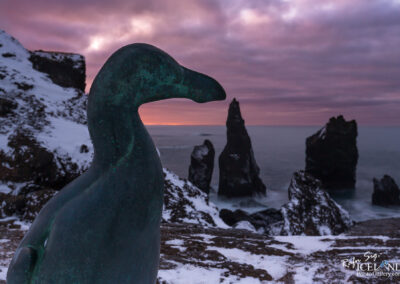 In memory of The Great Auk (Pinguinus impennis) - South West │
