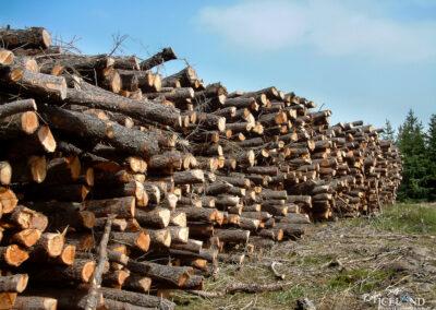 Logs piled up in Hallormsstaður – Eastfjords │ Iceland