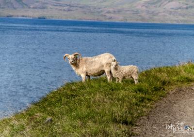 Aðalból road to Þingeyri - Westfjords │ Iceland Landscape Photography