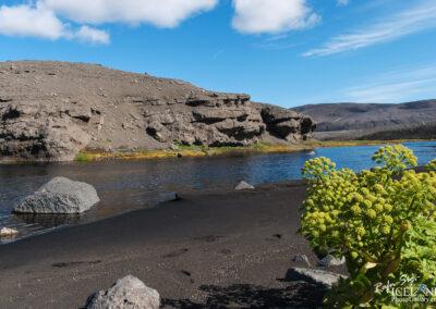 Angelica near Hvannalindir in the Vatnajökull National Park -