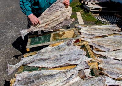 Man salting cod fish │ Iceland City Photography