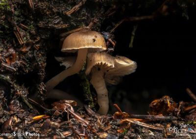 Sveppur │ Fungus │ Macro Photography