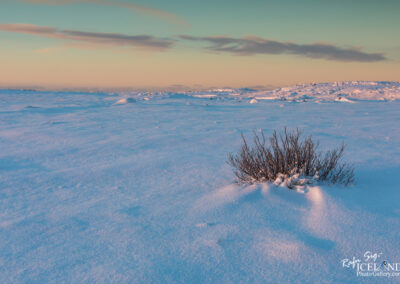 Bush in the wilderness - South West │ Iceland Landscape Photog
