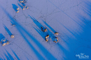 Long shadows – Hard Winters – Iceland Photo Gallery