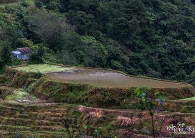 Aguian Banaue Rice Terraces - Philippine