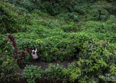 Aguian Banaue Rice Terrases = Philippine-