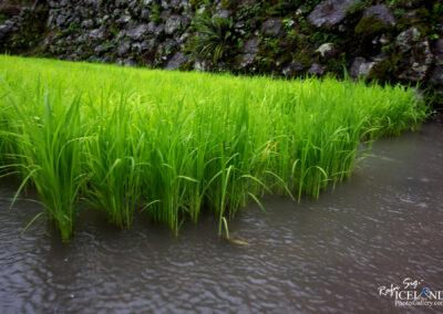 Batad Rice Terraces - Philippines
