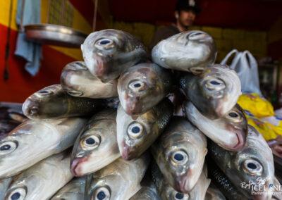 Fish in Baguio city - Philippines